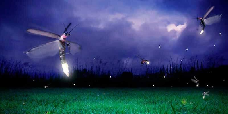 Grasveld onder donkere lucht met vuurvliegjes