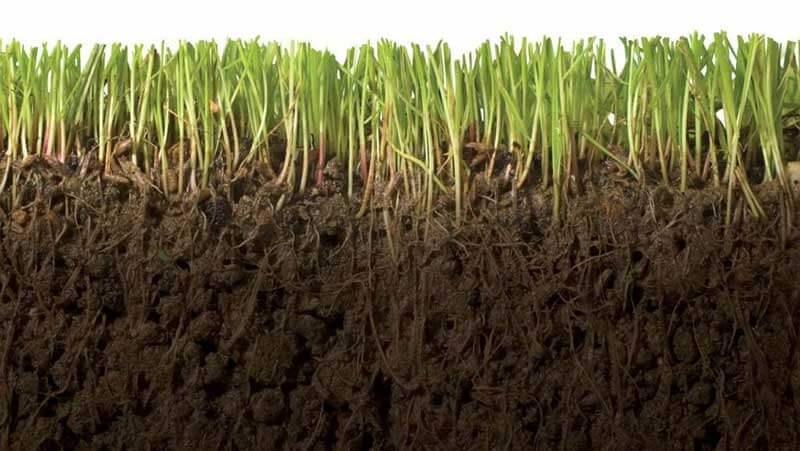 Een close-up van graswortels