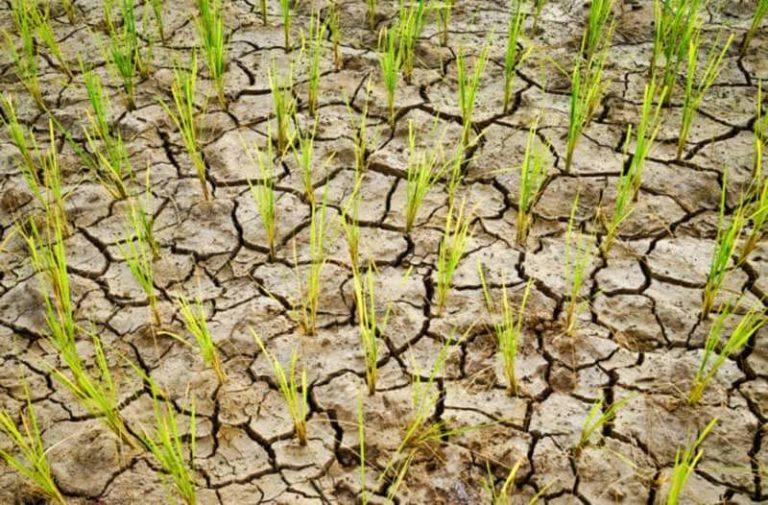 Kleine groene plantjes groeien tussen gebarsten stukken uitgedroogde aarde