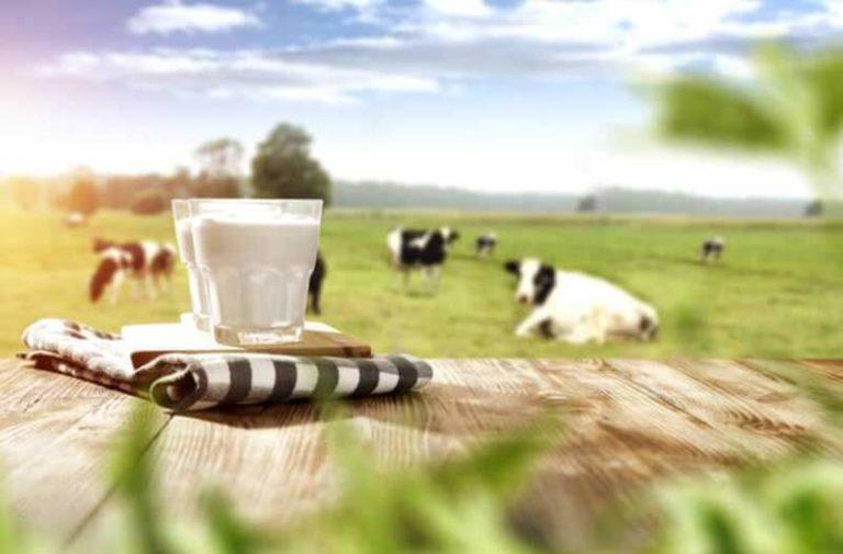 Een glas melk staat op een houten tafel in een groene weide met koeien