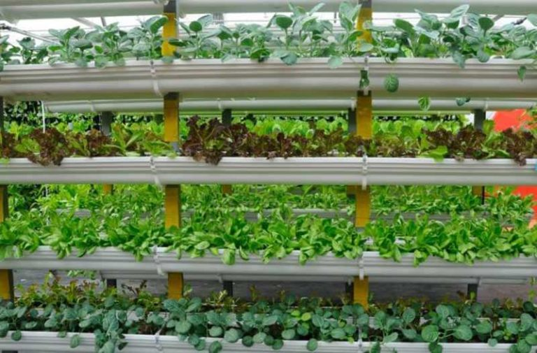 Close-up van de binnenkant van een verticale kwekerij met vier soorten gewassen in schappen boven elkaar