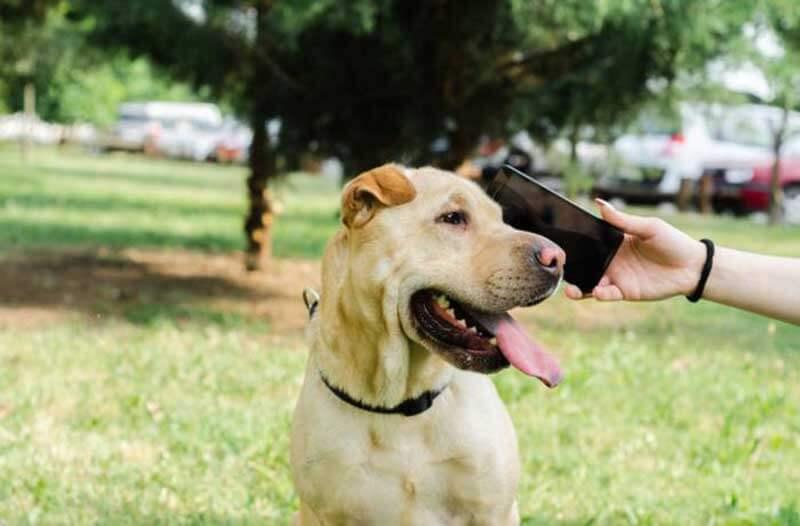 Persoon in een park houdt een smartphone tegen het oor van een hond